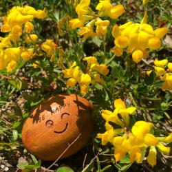 Be happy !! C'est le week-end !  ~ Bon week-end ensoleillé à tous ! ☀️ ~ #cade #boisdecade #soleil #sun #cadalithe #ambiancecade #auvergne #dehors #bronzage #garrigue #senteur #deco #behappy #fleurjaune #fleur #flower #yellow #colors #ideecadeau #madeinfrance #fabriqueenfrance #france #heureux #weekend #friday