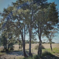 Un petit tour dans la garrigue ce lundi ???? ~ #garrigue #suddelafrance #cade #boisdecade #nature #provence #juniperusoxycedrus #boismagique #boisdessorcieres #southoffrance #sun #mondaymood #artisan #france #wood #frenchwoods #antimite #green #languedoc #arbre #plant #hiking #randonee